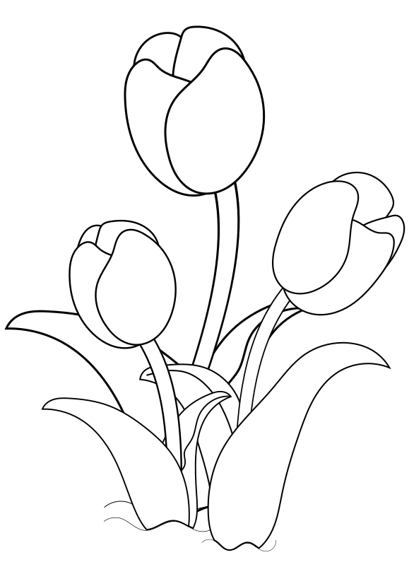 Tulip 1 Free coloring page for kids