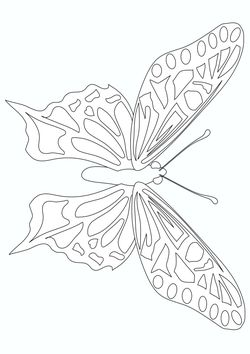 Butterfly2 free coloring pages for kids