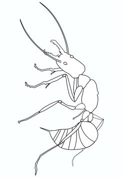 Real Ant Coloring Pages for kids