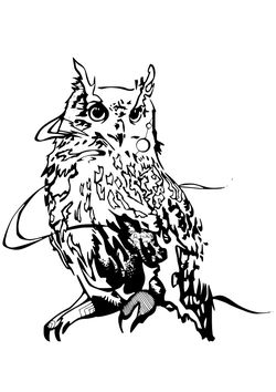 Premium 10 Owl free coloring pages for kids