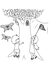 Insect Collecting free coloring pages for kids